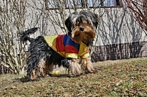 Hund, Kleidung