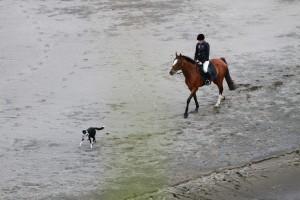 Hund-und-Pferd-Urlaub